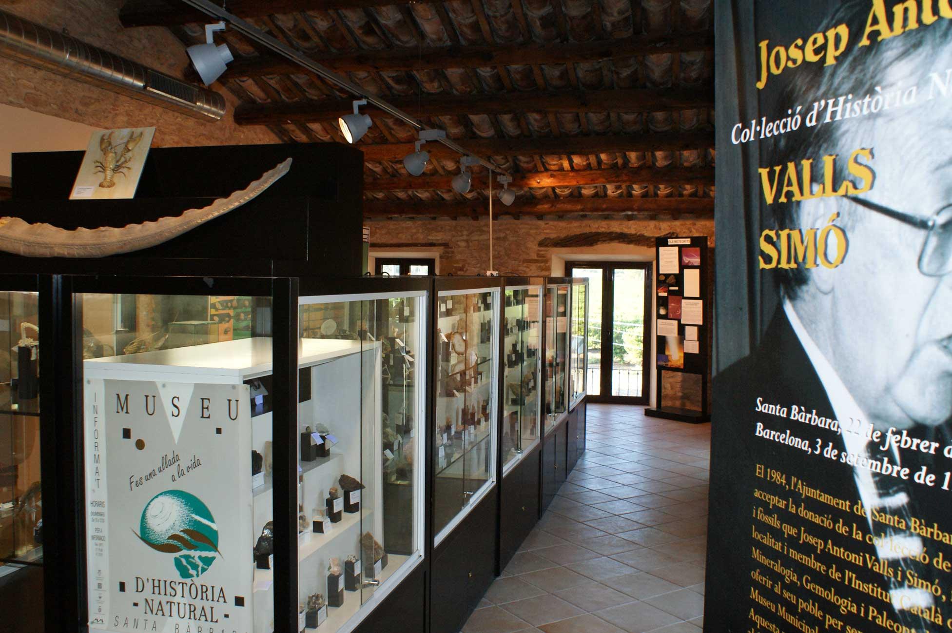 Museu de la vida a la plana
